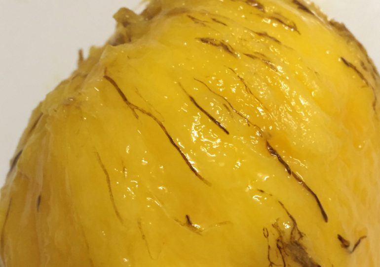Clues about mysterious mango disorder discovered
