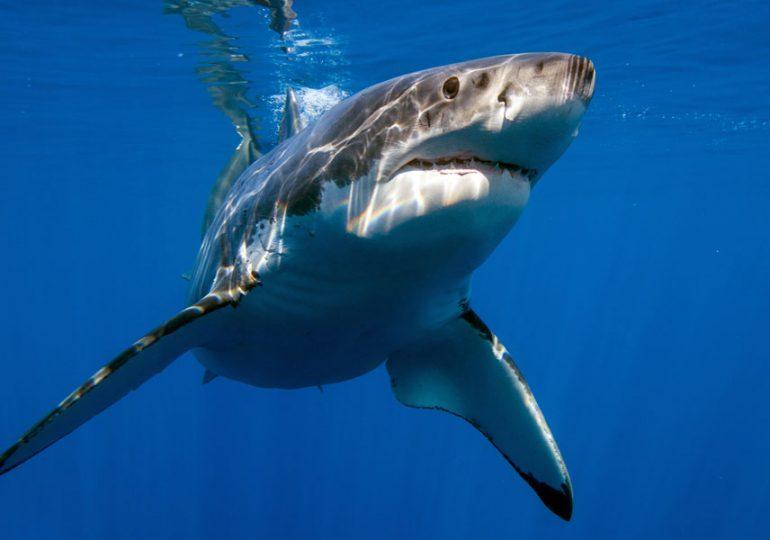 $8 million boost for WA's scientific shark hazard mitigation strategy