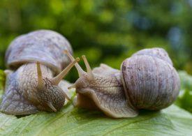 Workshops improve snail management knowledge