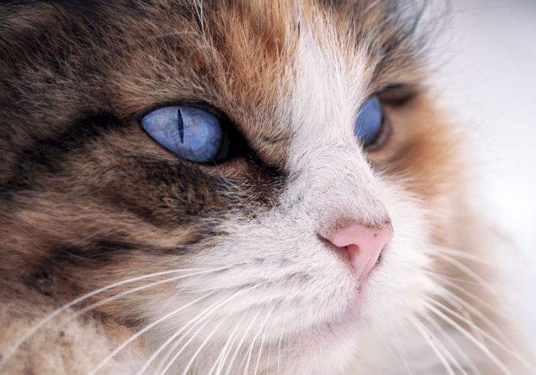 Pause for paws: have your say on WA's cat and dog laws