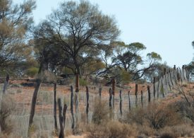 SA Dog Fence project rebuilding hope in state's pastoral zone
