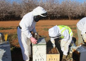Help at hand for growers and beekeepers