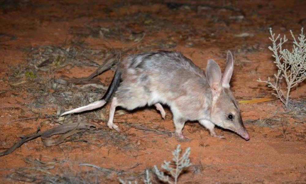 Predator-free fence saves native animals from extinction
