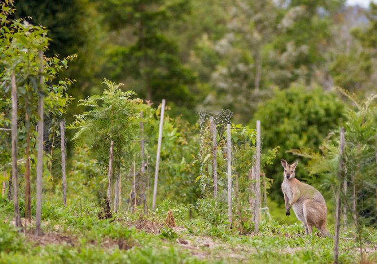 Rural landholder grant opportunities