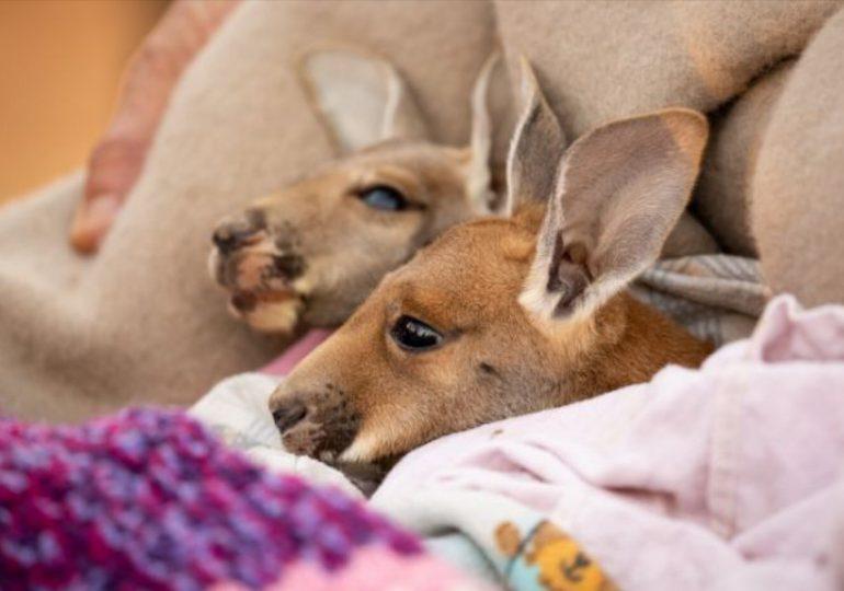 Extra funding to help wildlife rehabilitators