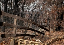 LGNSW welcomes rate relief for bushfire victims