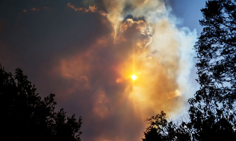 Australian Government assistance to help people affected by NSW bushfires