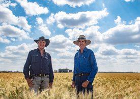 Reliant wheat pulls through tough season at Brigalow