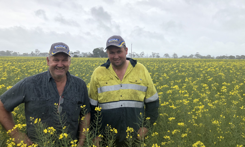Bordertown grower's Hyola 580CT canola saving money on weed control