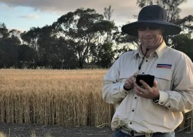 WA wheat program bolstered by new expert recruit