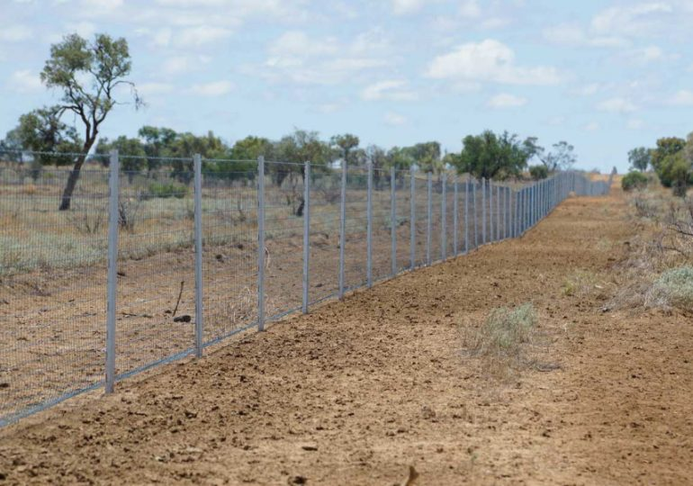 WIRES and Landcare Australia join forces in $1 million post-bushfire wildlife habitat regeneration