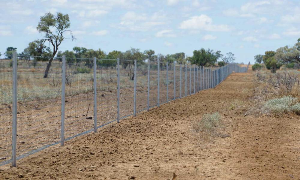 WIRES and Landcare Australia join forces in $1 million post-bushfire wildlife habitat regeneration