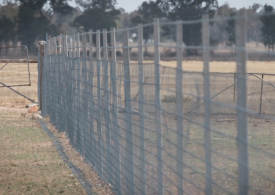 Cropping benefits from Waratah exclusion fencing