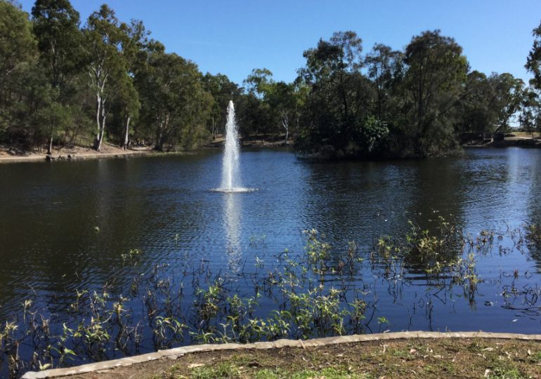 Water lettuce now under control at Reg Tanna Park duck pond