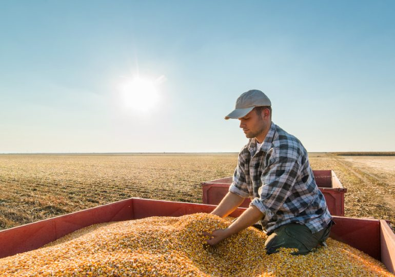 Australian grains industry critical for regional jobs