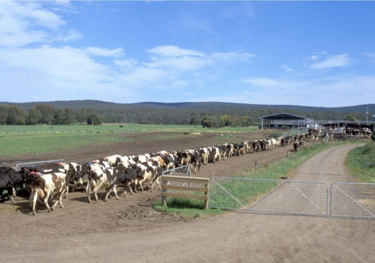 More support for northern dairy farmers