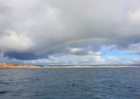New shellfish reef for South Australia