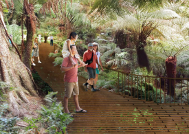 Immerse yourself in the ancient rainforest of Maits Rest in early 2020
