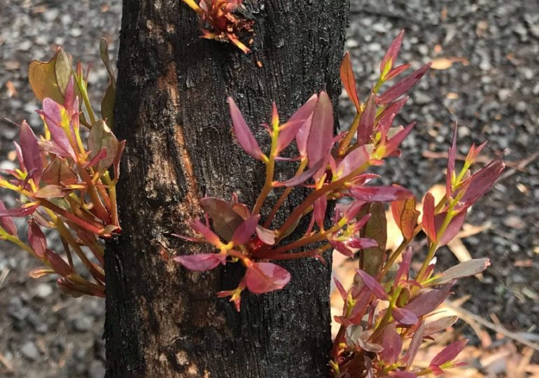 Citizen scientists get snappy for bushfire-ravaged environment