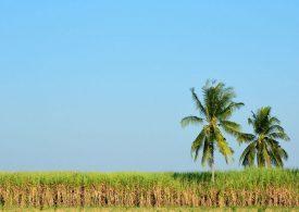 Grant supports sugarcane waste research for Burdekin biorefinery