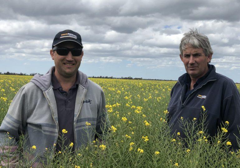 Victorian grower one of the first in Australia to grow TruFlex-triazine canola