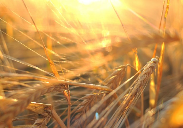 Freedom of choice restored for SA growers
