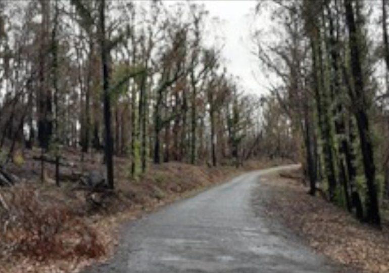 Roadside burnt vegetation clearing program makes valuable progress