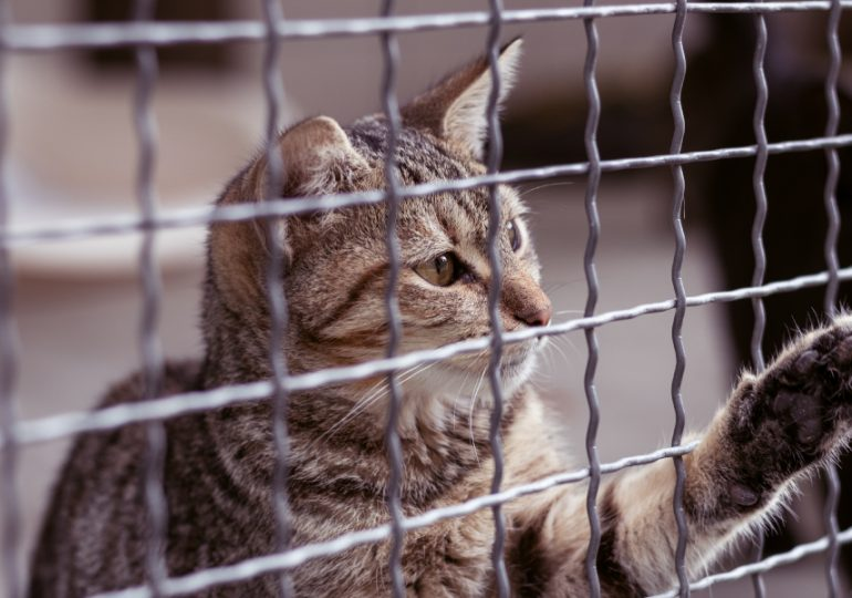 Views sought on safely reuniting lost pets with owners