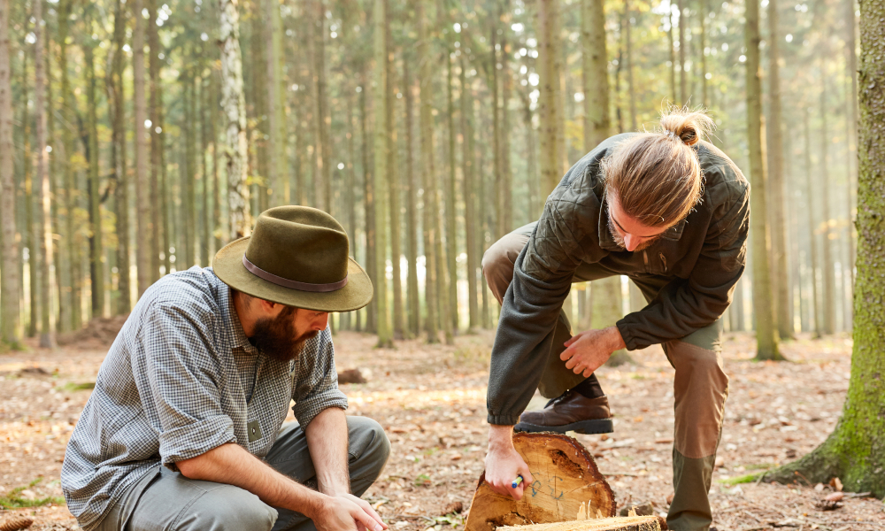 Growing forestry jobs through innovation