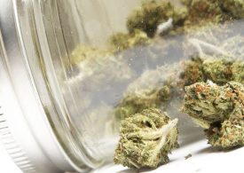 Medicinal cannabis manufacturing boost for the South-West