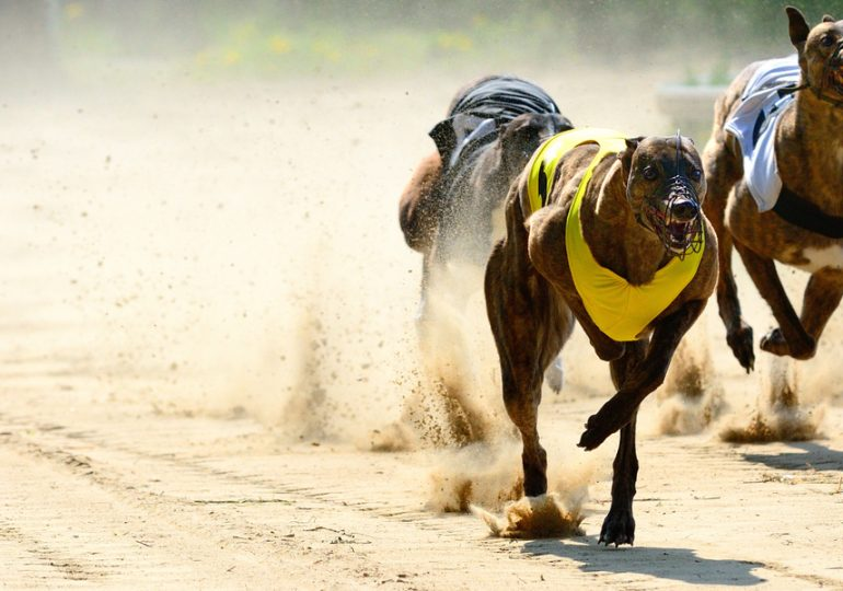 Greyhound Racing NSW secures world-first farm-stay facility