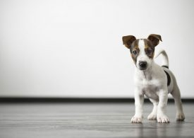 New technology to strengthen pet register