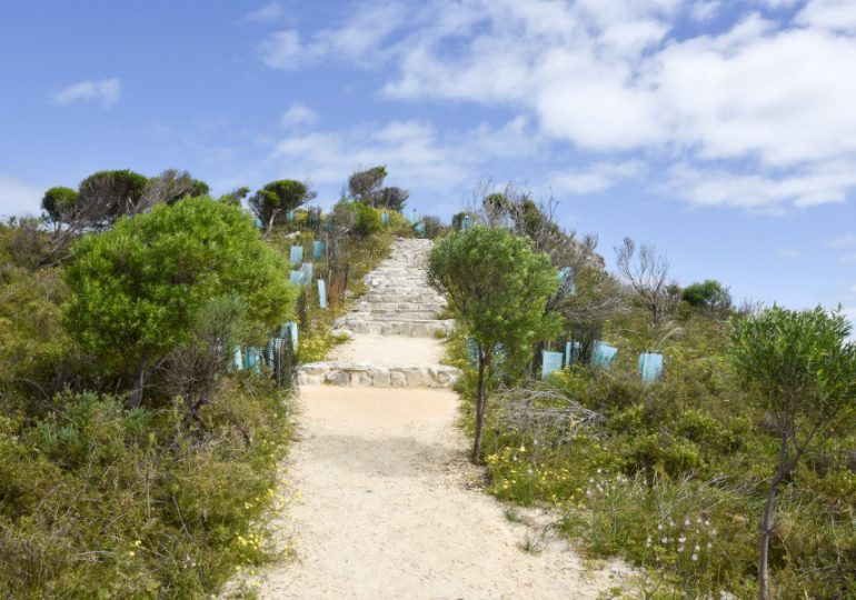 Seagrass paves the way for a carbon-neutral Rottnest
