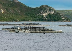 Have your say: Fisheries resource sharing framework