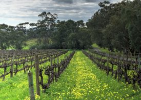 McLaren Vale's first organic producer, Bosworth Wines, celebrates 25 years of organic vineyards