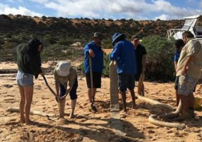 Shark Bay Festival to focus on seagrass devastated by heatwave