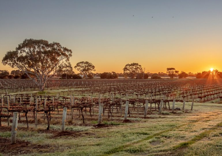 Langhorne Creek vineyard on the market