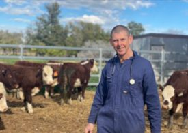 NSW livestock disease investigations following drought-breaking rains