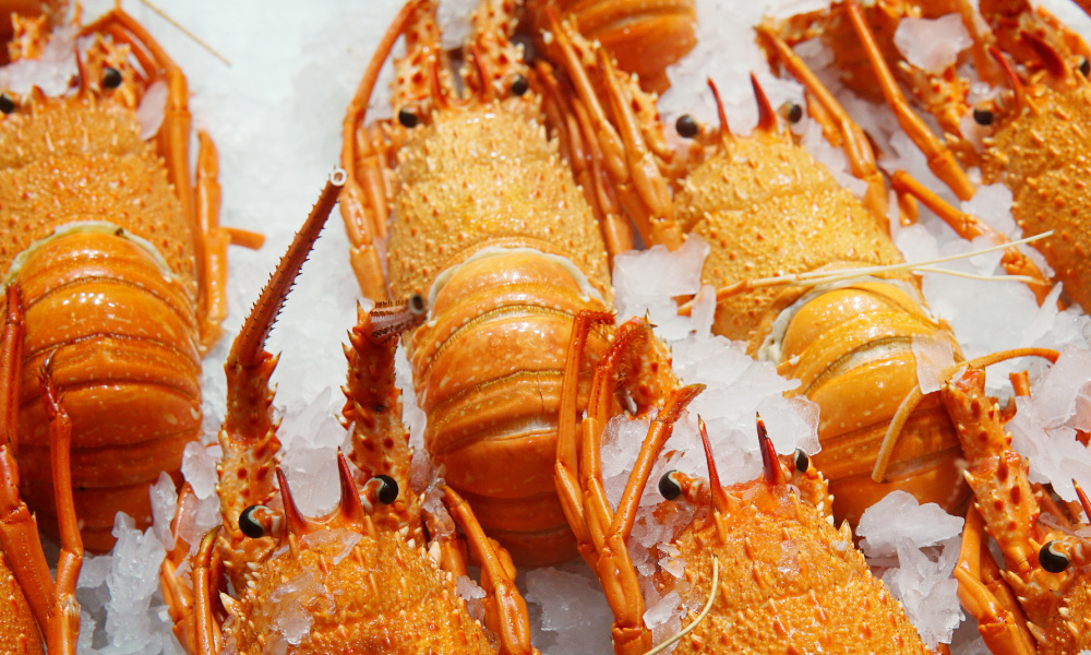 Back of boat sales offers more rock lobster for Western Australians