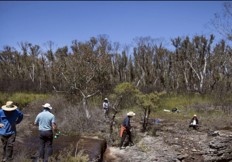 Artist expedition captures recovering Blue Mountains swamplands