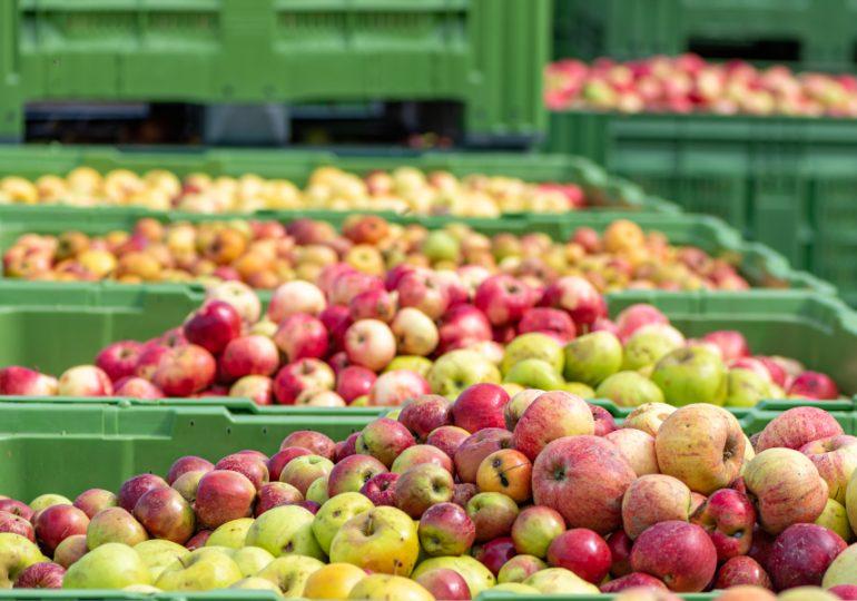 Mildura storage facilities boosts fruit exports and jobs