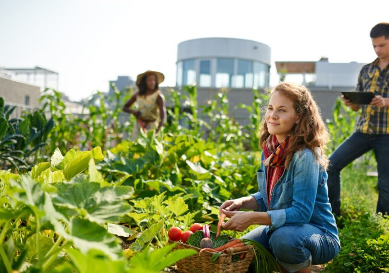 Soils & Nutrition Masterclass for horticulture growers