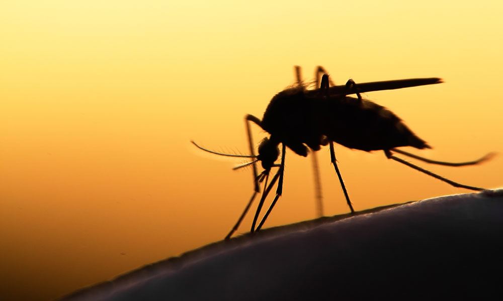 Mosquito activity to increase following heavy rain