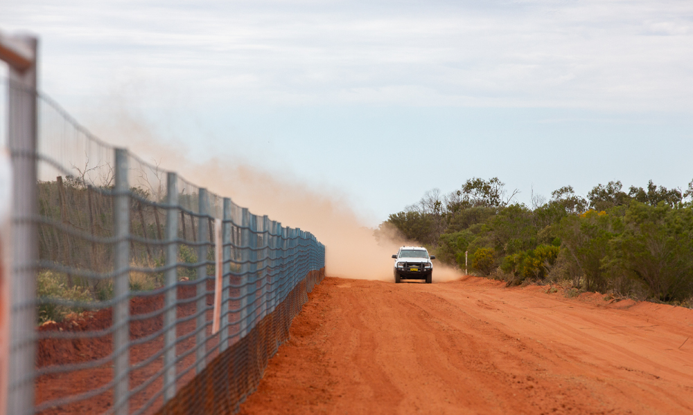 Have your say on the NSW Wild Dog Fence Extension project through community consultation sessions