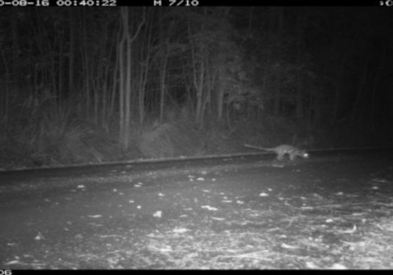 Camera traps detecting the undetected