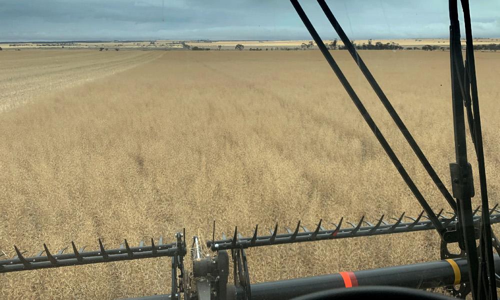 Strategies for managing high moisture grain at harvest