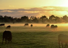 Vaccinate now to protect livestock from anthrax