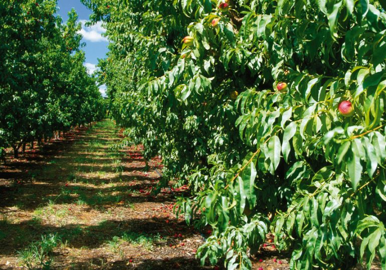 Pick up fallen fruit in orchards