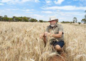WA grain industry plans a carbon neutral future