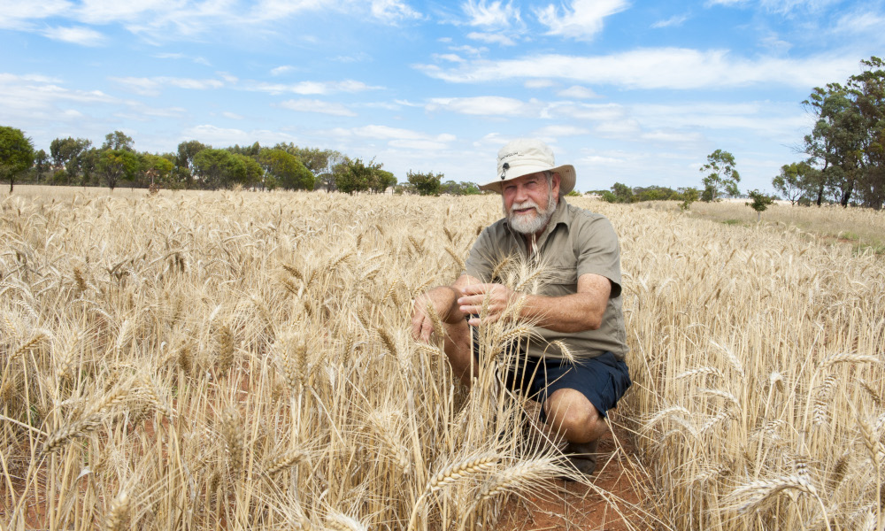 WA grain industry plans a carbon neutral future